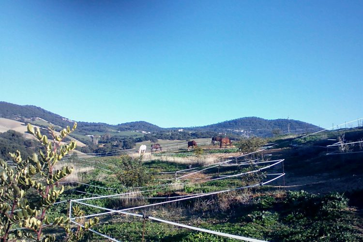 Paddock Trail Finca La Colada