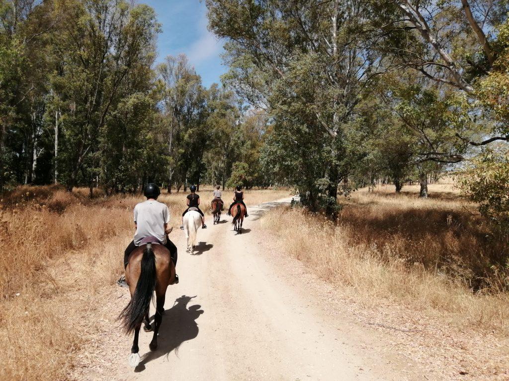 Tagesritt Stausee Eukalyptus