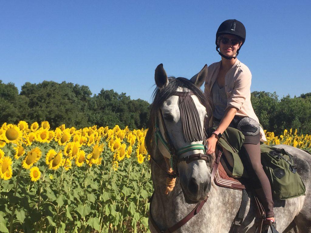 Reiturlaub Andalusien Sonnenblumen equiVentura