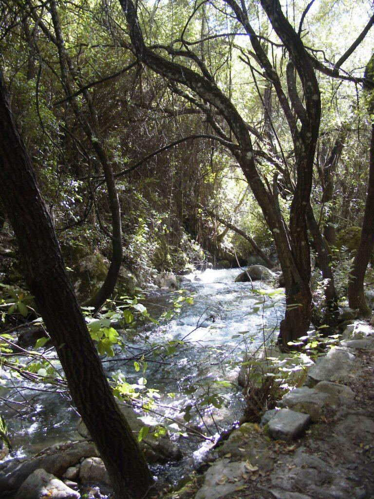 weg am rio el bosque